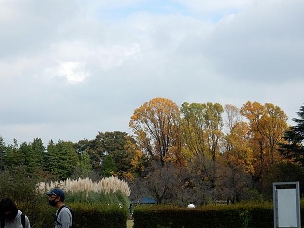 神代植物公園 1_d0075453_19324903.jpg