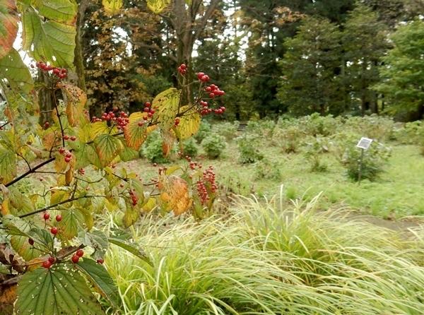 神代植物公園 1_d0075453_19330209.jpg