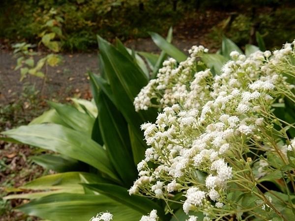 神代植物公園 1_d0075453_19581051.jpg