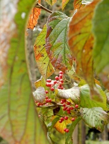 神代植物公園 1_d0075453_20112681.jpg