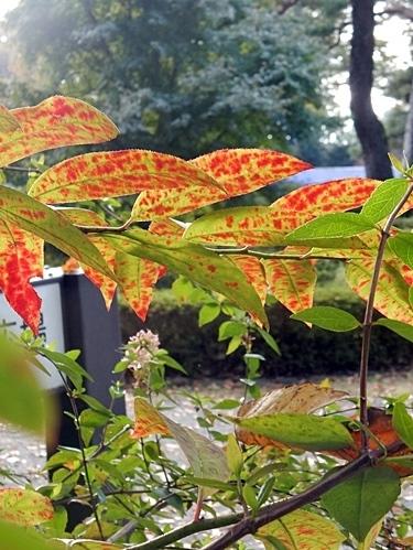 神代植物公園 1_d0075453_20133374.jpg