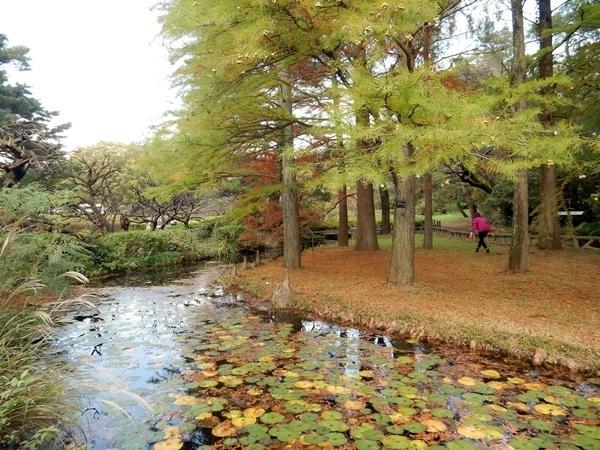 神代植物公園 1_d0075453_20291461.jpg
