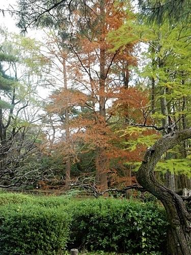 神代植物公園 1_d0075453_20335391.jpg