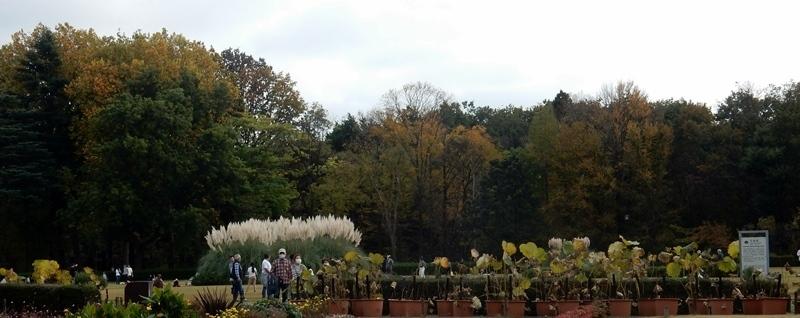神代植物公園 1_d0075453_20354167.jpg