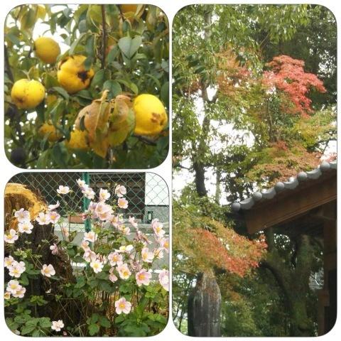 秋の散策〜杖をついて歩く、楽しむ_e0281793_16481245.jpeg