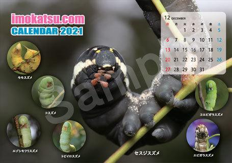 いもむし卓上カレンダーなど ご予約受付中!_b0025008_16542661.jpg