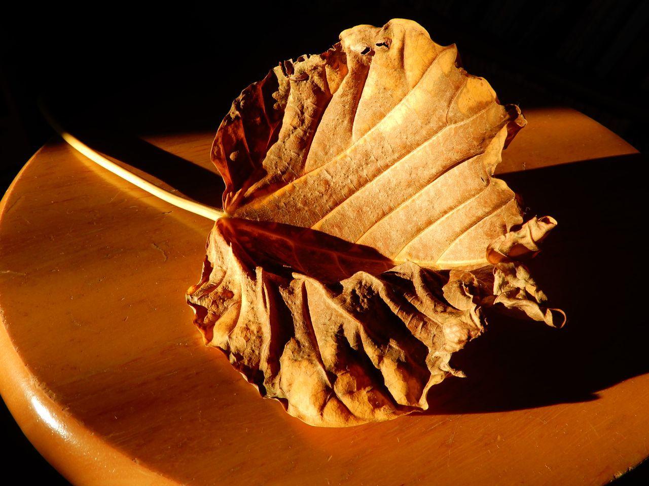 一転、暖かな秋の一日_c0025115_21225349.jpg