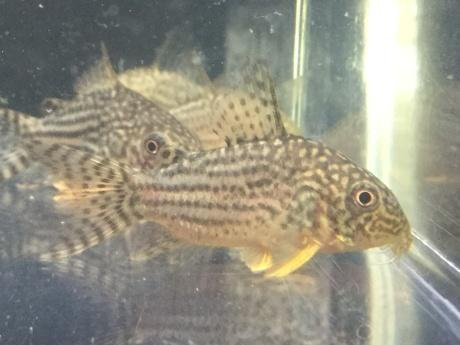 201105 熱帯魚 金魚 めだか 水草_f0189122_12283725.jpeg