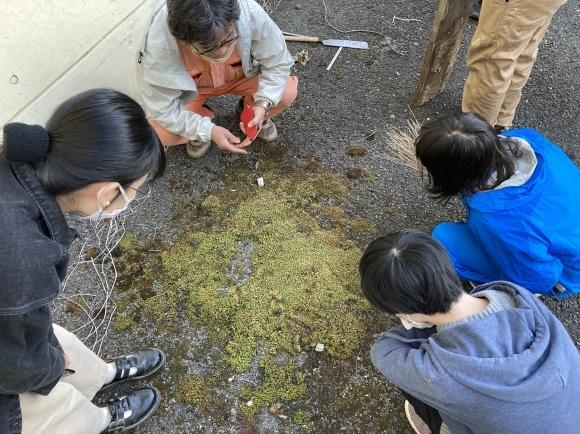 庭師・高橋さんが来た!/苔を探して散策/茶庭養生_e0156224_18465953.jpg
