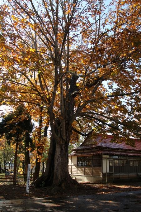 境内の樹のお話_b0238249_20213053.jpg