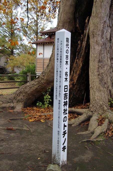 境内の樹のお話_b0238249_20220554.jpg