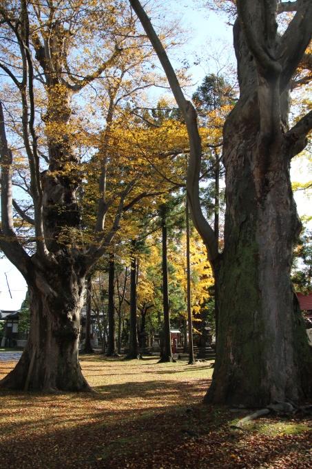 境内の樹のお話_b0238249_20241016.jpg