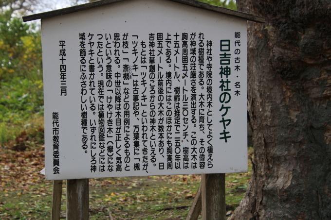 境内の樹のお話_b0238249_20244629.jpg