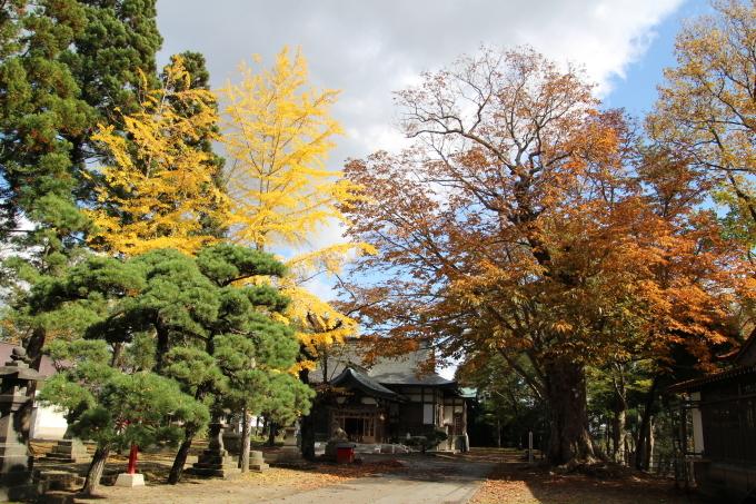 境内の樹のお話_b0238249_20273722.jpg