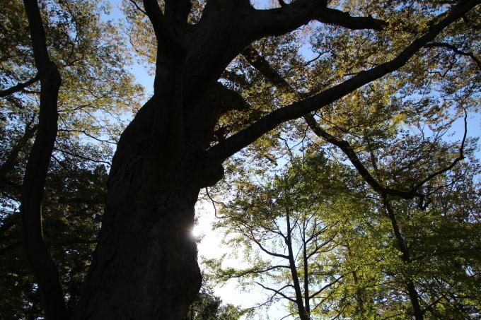 境内の樹のお話_b0238249_20282540.jpg