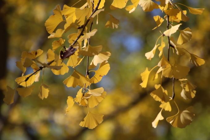 境内の樹のお話_b0238249_20311393.jpg