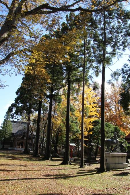 境内の樹のお話_b0238249_20390203.jpg