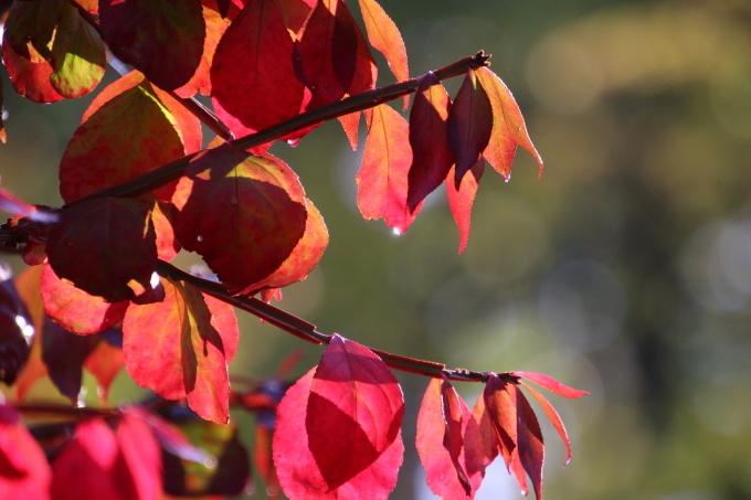 境内の樹のお話_b0238249_21053023.jpg