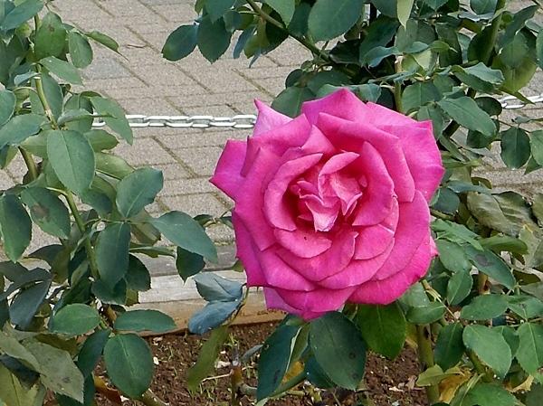 神代植物園 2_d0075453_20343957.jpg