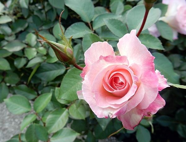 神代植物園 2_d0075453_20352444.jpg