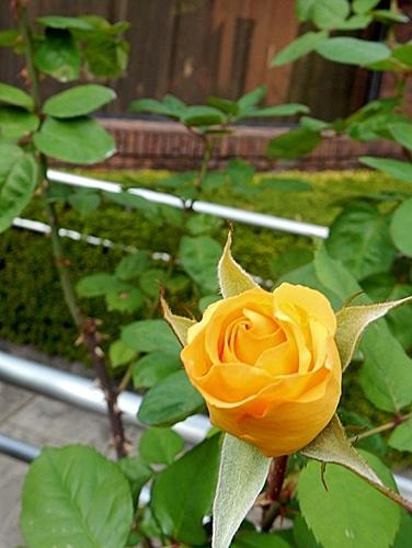 神代植物園 2_d0075453_20355171.jpg
