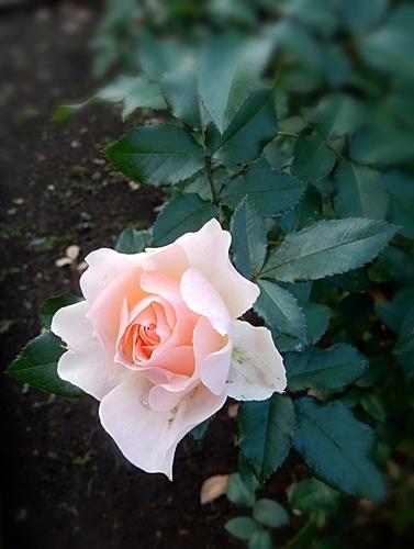 神代植物園 2_d0075453_20373191.jpg