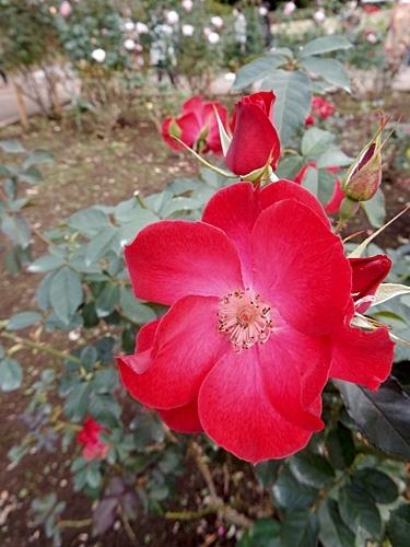 神代植物園 2_d0075453_20384808.jpg