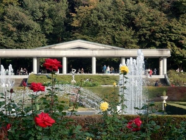 神代植物園 2_d0075453_20433967.jpg