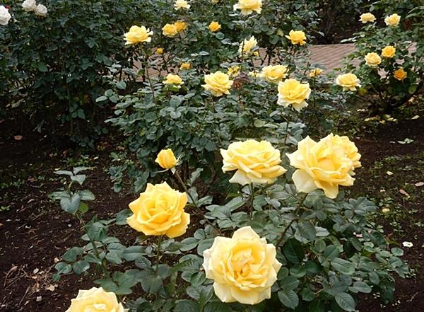 神代植物園 2_d0075453_20441667.jpg