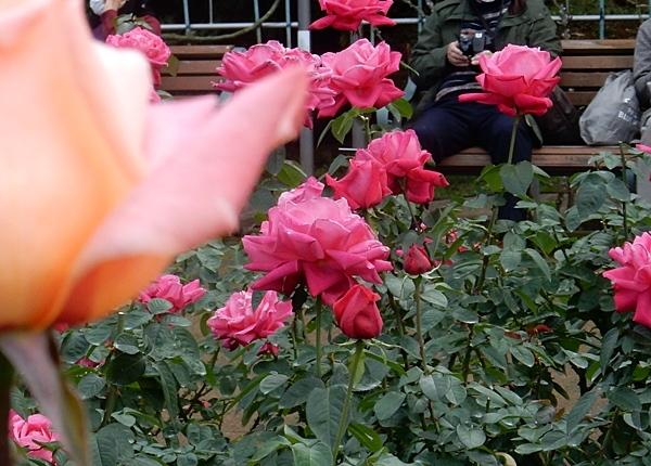 神代植物園 2_d0075453_20443829.jpg