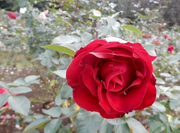 神代植物園 2_d0075453_20475905.jpg