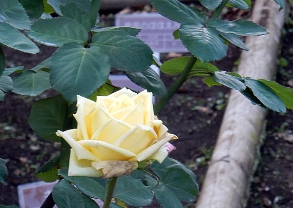 神代植物園 2_d0075453_23111118.jpg