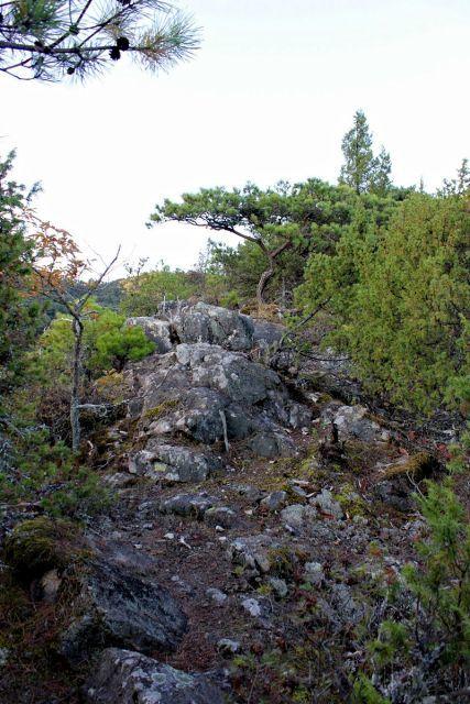 熊山 竜の岩から反射板コースを登る!の巻_f0325295_16273055.jpg
