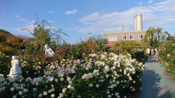 いかほどにあろうか秋の薔薇の園_d0051106_22172941.jpg