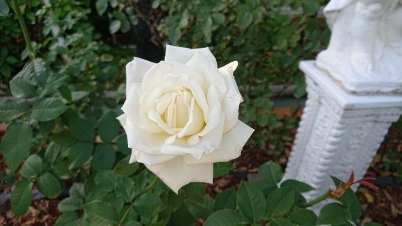 いかほどにあろうか秋の薔薇の園_d0051106_22180968.jpg