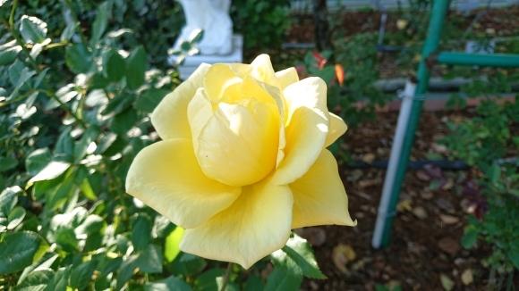 いかほどにあろうか秋の薔薇の園_d0051106_22195490.jpg