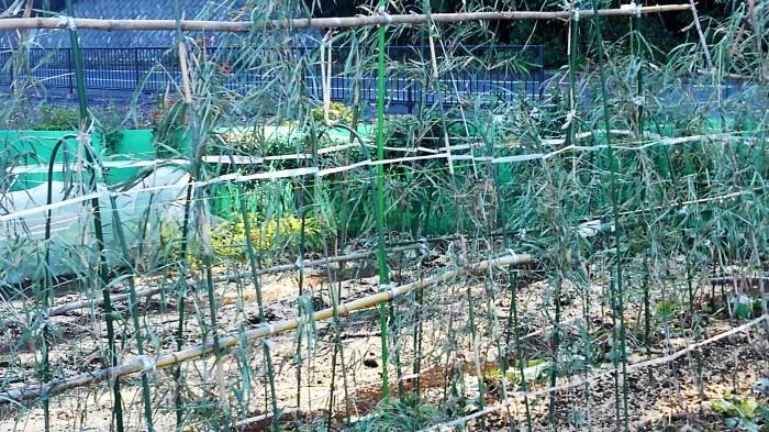 ■Myファーム発【芋類の最終収穫/各種野菜の植え付け・芽出し種の防寒・防霜・虫除け・鳥除け対策など。】_b0033423_01332297.jpg