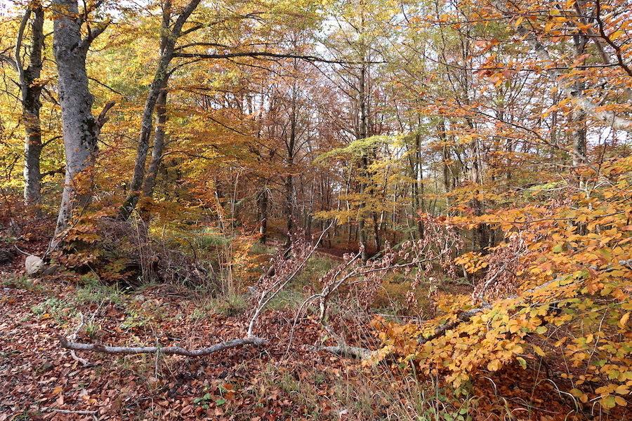 秋の幸きのこパスタ焼き栗とカボチャのカレー_f0234936_07363306.jpeg