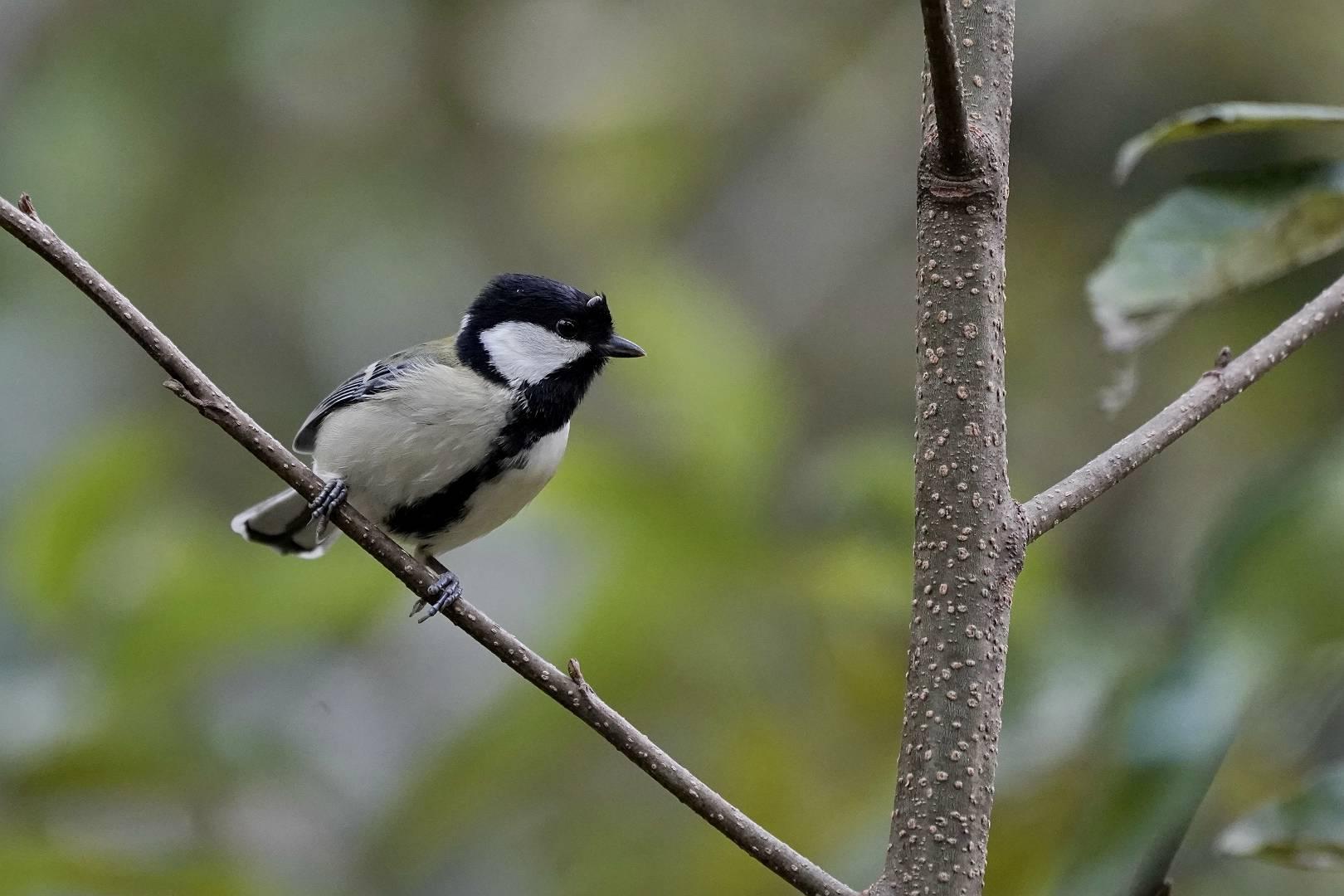 里山でいつもの鳥撮りです_e0112946_17013592.jpg