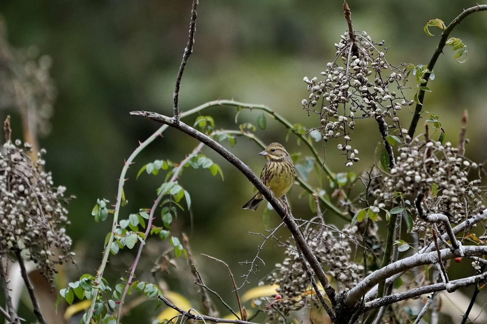 里山でいつもの鳥撮りです_e0112946_17014050.jpg