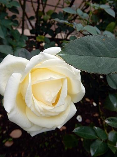 神代植物園 2_d0075453_08374843.jpg