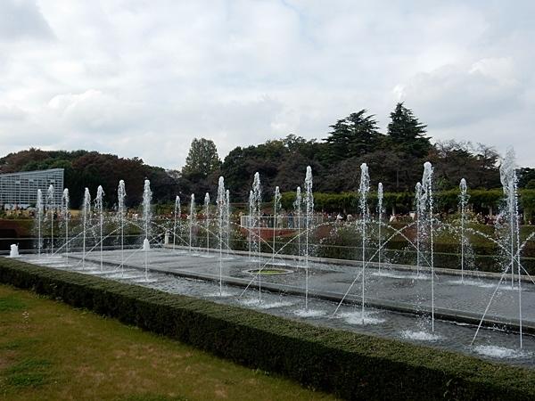 神代植物園 2_d0075453_09030211.jpg
