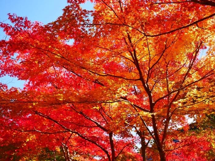 紅葉の高野山  2020-11-09 00:000_b0093754_22012781.jpg