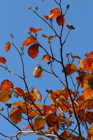 立冬の朝。。。 !  !_a0248459_15025210.jpg