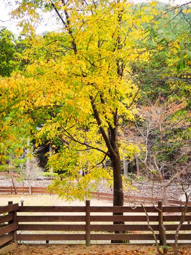 森のひとときリピート_b0035072_19042294.jpg