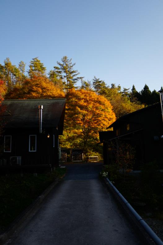 秋の風がふいています_b0398673_12563619.jpg