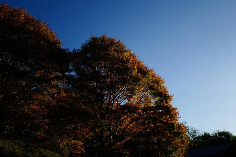 秋の風がふいています_b0398673_12563735.jpg