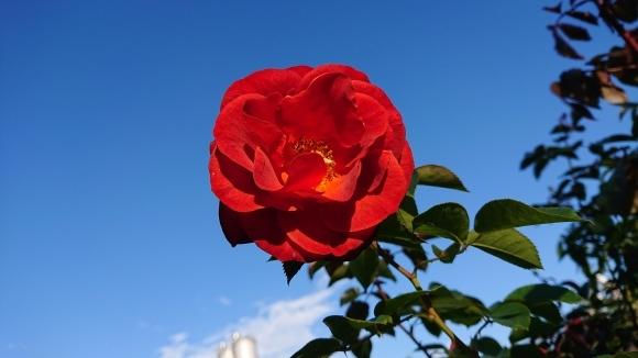 彩がある四季がある庭バラの園_d0051106_12281887.jpg