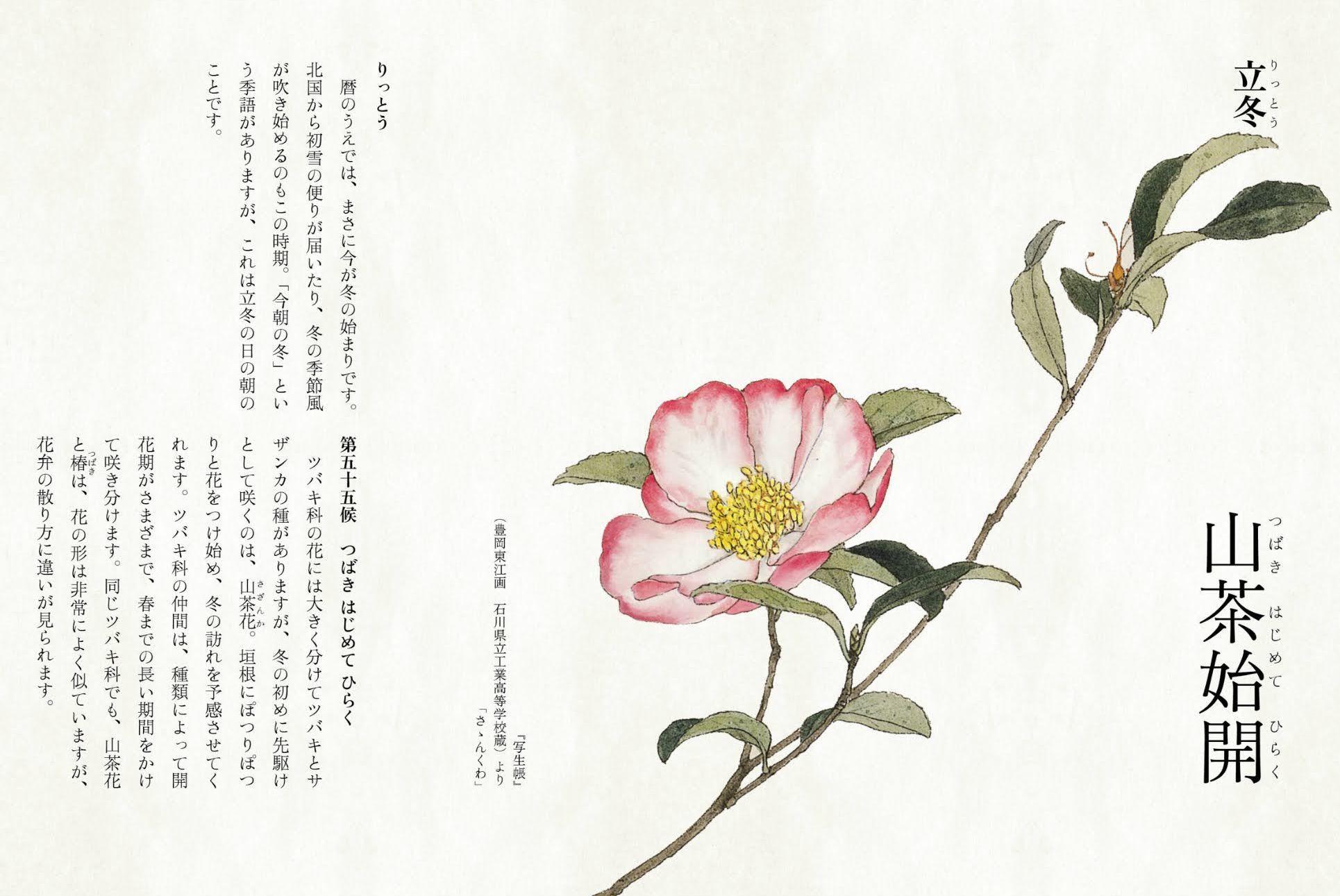 小春日和に冬支度_c0025115_22291187.jpg