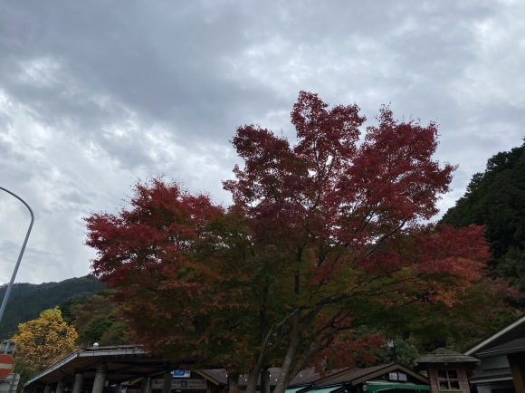 修学旅行 (四国~淡路島)_b0329603_12512700.jpg